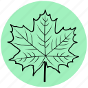 forest, garden, leaf, liner, maple, nature, tree icon