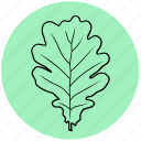 ecology, forest, leaf, liner, nature, oak, tree icon