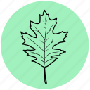 eco, forest, garden, leaf, liner, maple, tree icon