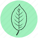 cherry, ecology, floral, garden, leaf, liner, nature icon