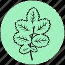 dog-rose, ecology, garden, leaf, liner, plant, rose icon