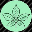 agriculture, chestnut, forest, garden, leaf, liner, plant icon
