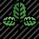 strawberry, farming, gardening, leaves, nature