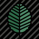 tree, botanical, leaf, plant, nature