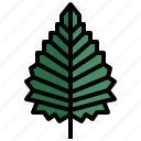 birch, tree, garden, leaves, autumn