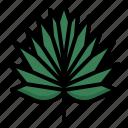 fan, plam, tropical, nature, botanical, leaf
