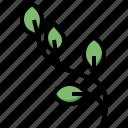 willow, botanic, gardening, tree, nature