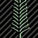 autumn, eco, leaf, nature, plant, tree, yew