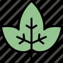 autumn, eco, ivy, leaf, nature, plant, tree
