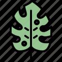 autumn, eco, leaf, monstera, nature, plant, tree