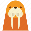 animal, animal face, cartoon, linear animal, sea dog, sea dog face icon