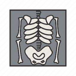 bones, medical, skeleton, x ray icon