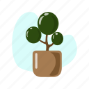 green, leaf, little, nature, plant, pot, tree