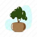 decoration, green, leaf, nature, plant, pot, tree