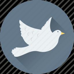 bird, love message, loving bird, pigeon, romance icon