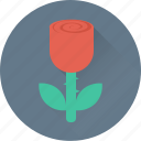blossom, flower, red rose, rose, rosebud icon