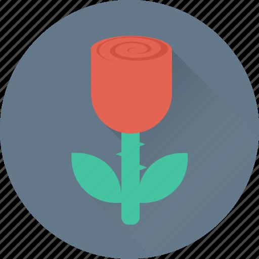 blossom, flower, red rose, rose, rosebud icon