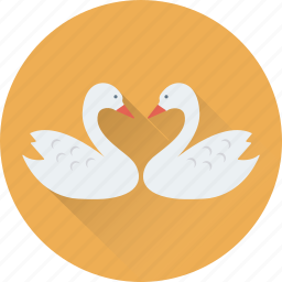 animal, bird, duck, in love, kissing icon