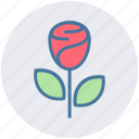blooming flower, flower, heart, love, rose, rose blooming, valentine icon