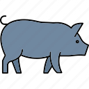 pig, pork, animal, farm, livestock