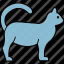 cat, animal, animals, pet