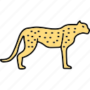 tiger, animal, felidae, pantherinae