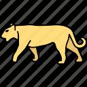 tiger, lion, animal, big cat