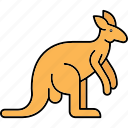 animal, animals, kangaroo, mammal