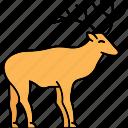 animal, deer, elk, mammal icon
