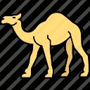 camel, desert camel, gulf animal, animal