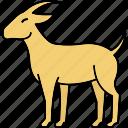goat, horn, animal, animals