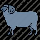 sheep, animal, animals, farm