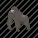 animal, ape, gorilla, mammal, orangutan, primate