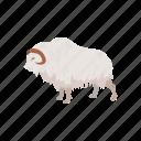 animal, mammal, musk ox, muskox, sheep-ox icon