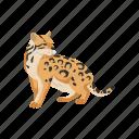 animals, canine, leopard, mammal, ocelot, pet, wild cat
