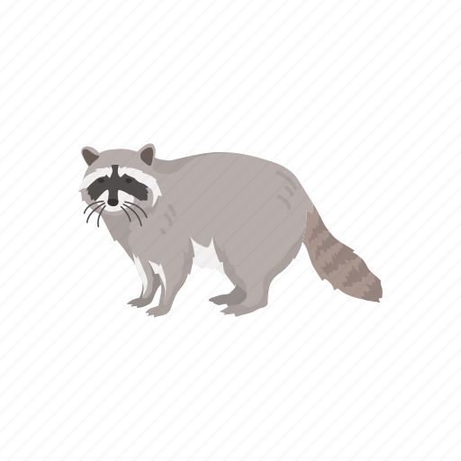 animals, coon, mammal, pest, racoon icon