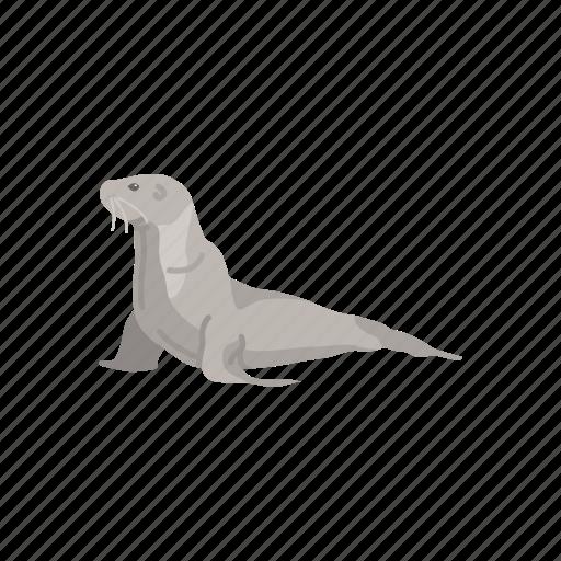 animals, aquatic animals, flippers, mammal, sea lion, seal icon