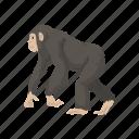 animal, ape, bonobo, chimpanzee, chimps, mammal icon