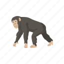 animal, ape, bonobo, chimpanzee, chimps, mammal