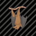 animal, bat, bumblebee bat, flying fox, mammal, megabats, webbed wings