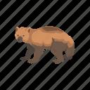 animals, bear, carcajou, glutton, mammal, wolverine, wolvorene