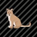 animal, cougar, feline, mammal, mountain lion, panther, puma icon