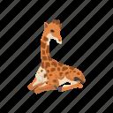 animal, camelopard, giraffa, giraffe, mammal, tallest animal icon