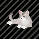 animal, cat, house cat, kitten, mammal, pet, scottish fold