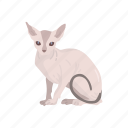 animal, cat, feline, kitten, mammal, pet, sphynx icon