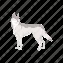 animal, canine, husky, mammal, pet, siberian husky icon