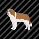 animal, canine, giant dog, mammal, pet, st.bernard