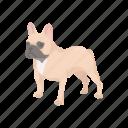 animal, boston terrier, bulldog, dog, mammal, pet, terrier icon