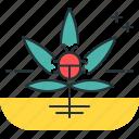 bug, cannabis, marijuana, pest, weed