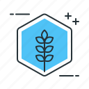 linalool, plant